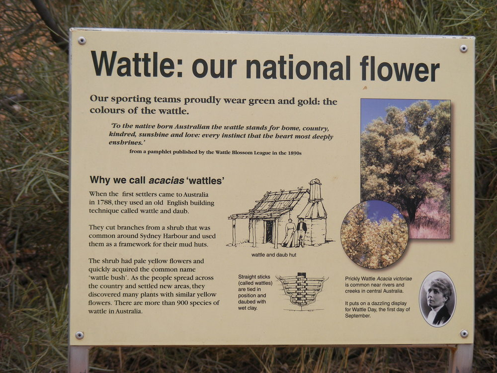 Wattle, the national flower