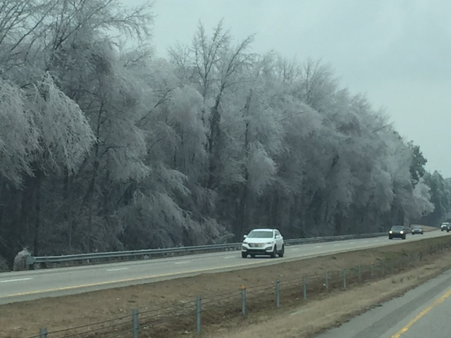 Ice trees on the I95 route