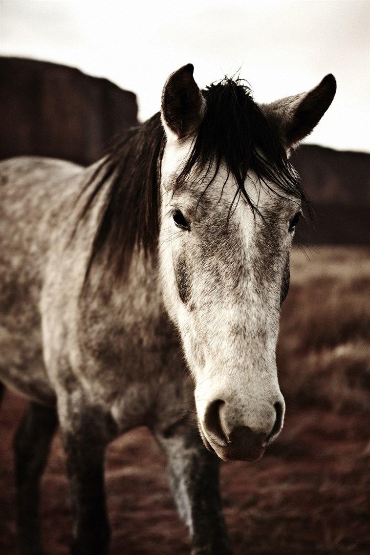 photo of grey horse.jpg