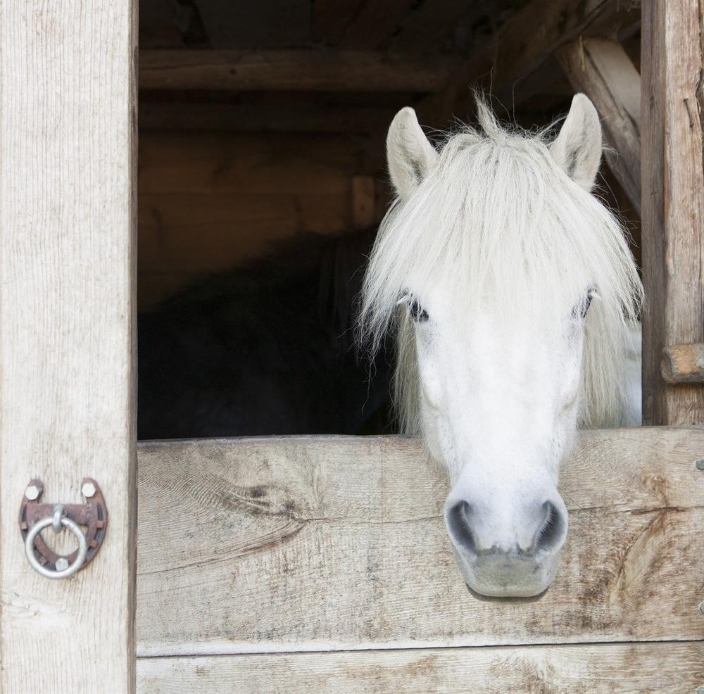 horse hope.jpg