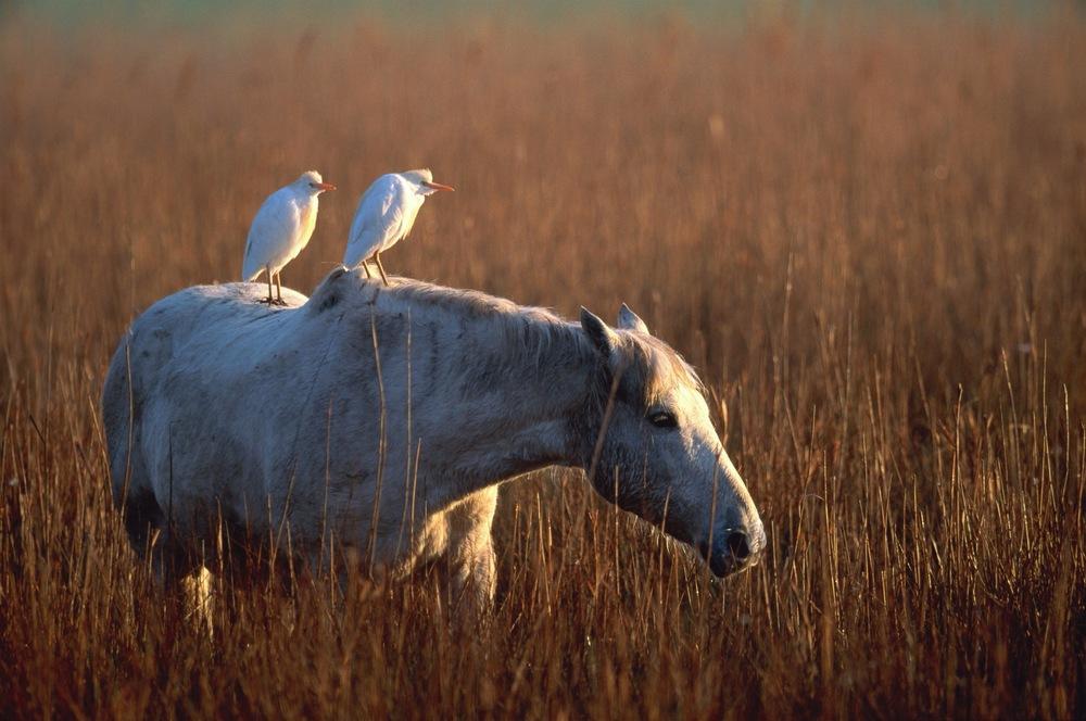 horse patience.jpg