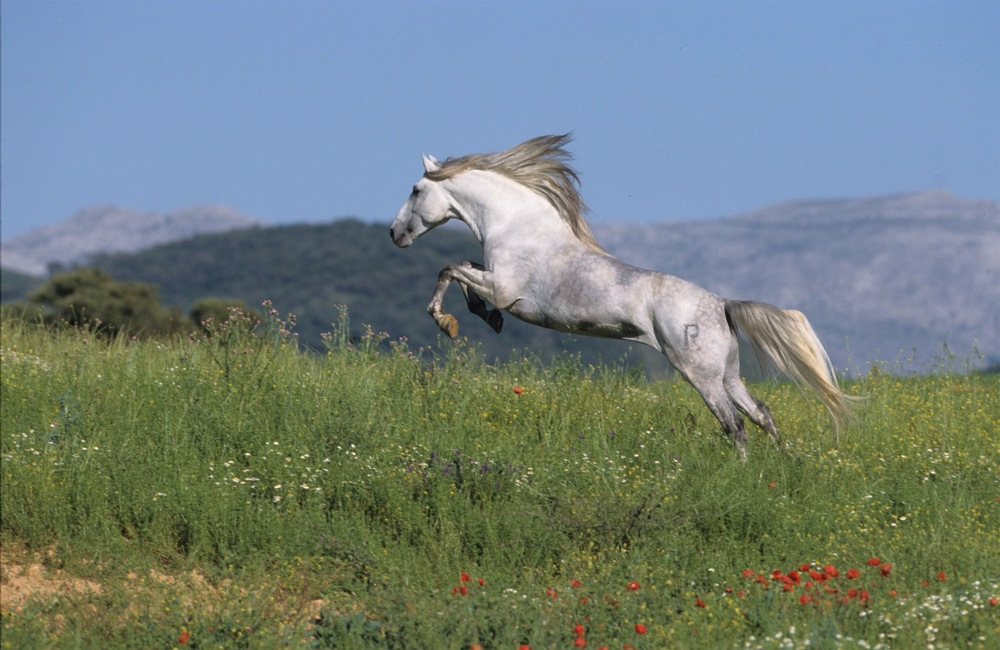 horse courage.jpg