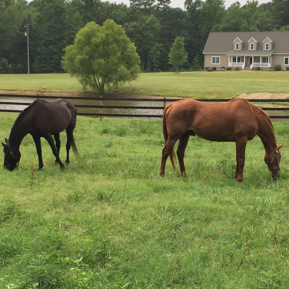 First horses here.jpg