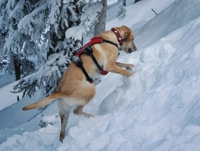 A courageous doggie!