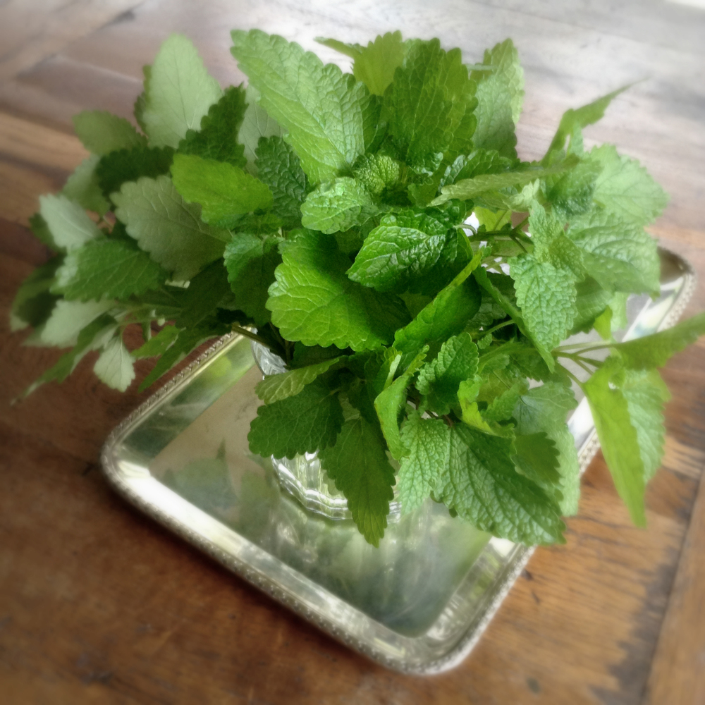 Freshly picked Lemon Balm from the gardens of Luana Farm