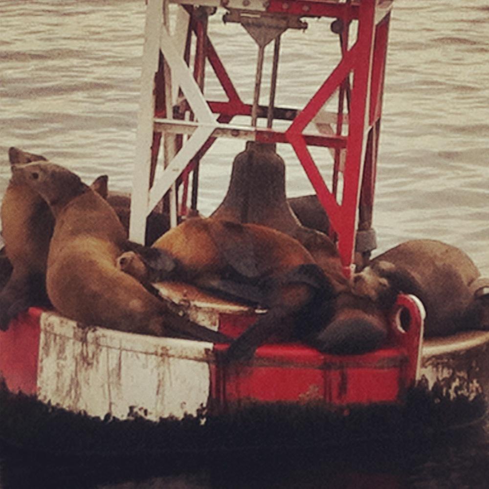 seals pacific ocean