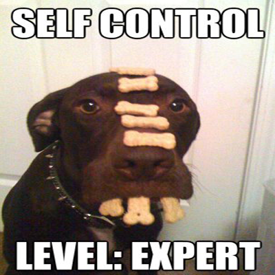 dog self control