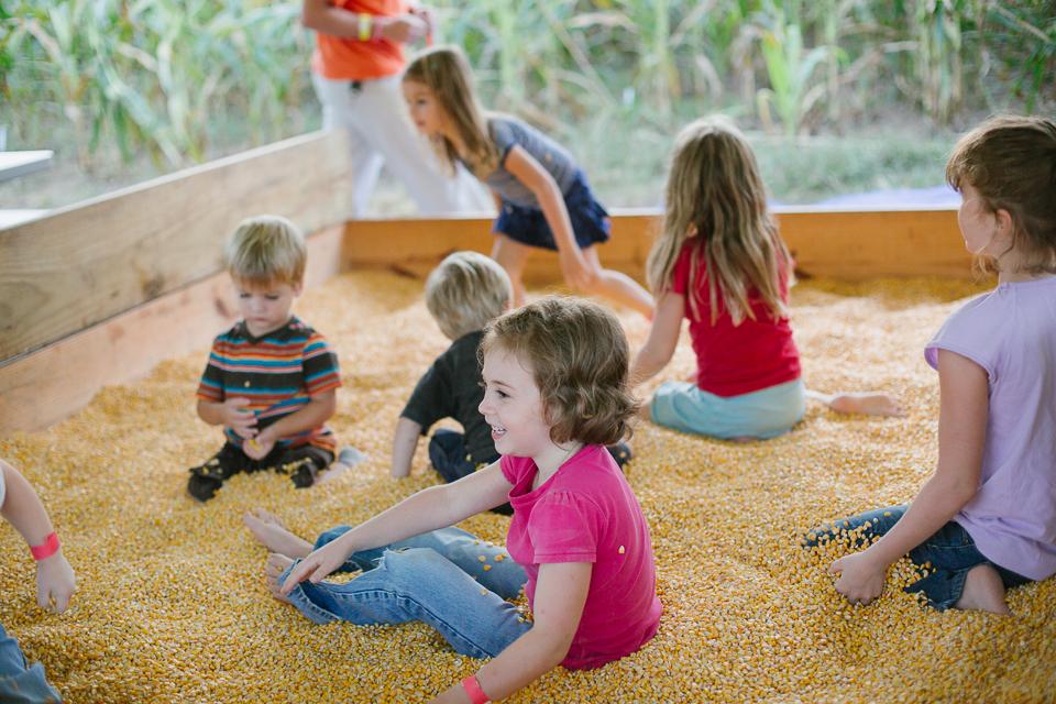 Athens Corn Maze