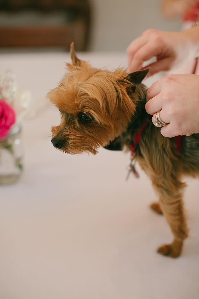 dogs in weddings Ga wedding