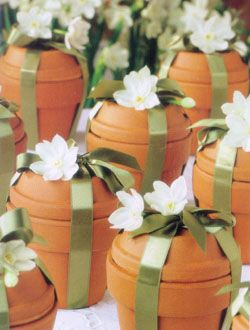packaged_flower_bulbs