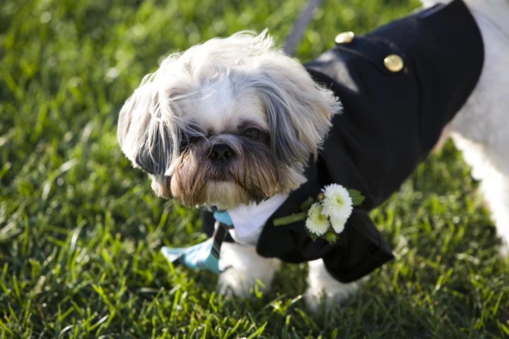 A doggieboutonniere!