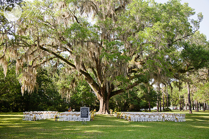 The live oak trees with Spanish moss are a spectacular backdrop for a wedding ceremony.