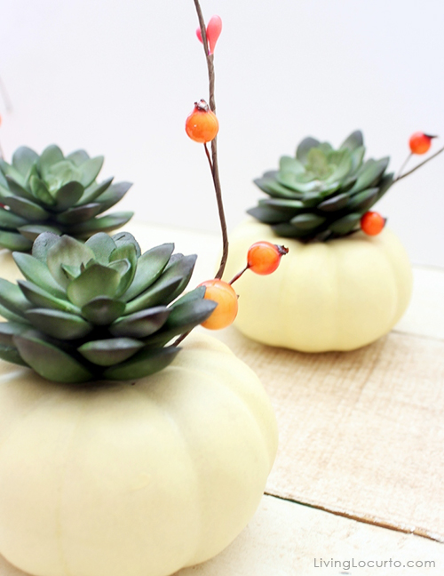 DIY Mini Pumpkins & Succulent Centerpieces