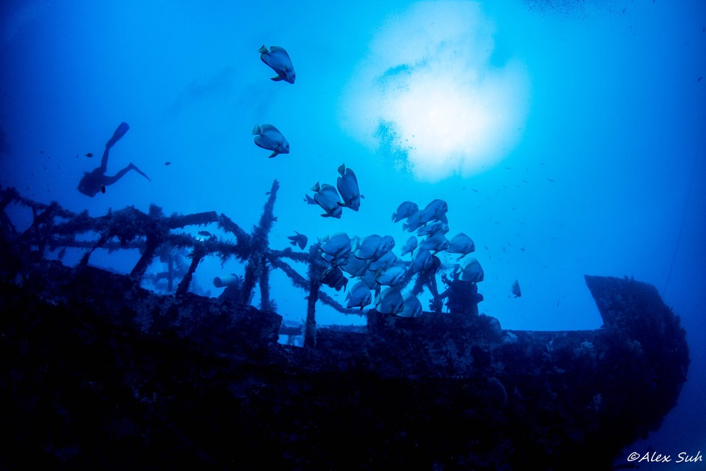 Bat Fish over Alma Jane Wreck