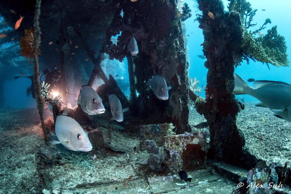 Sweet Lips Under Dry Dock Wreck