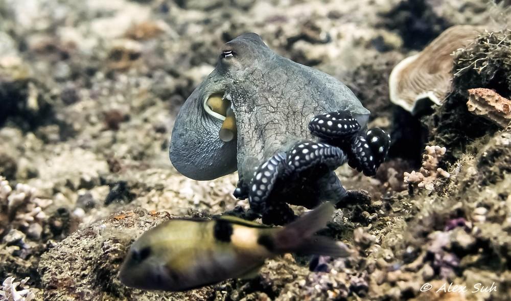 Octopus Curled Legs.jpg