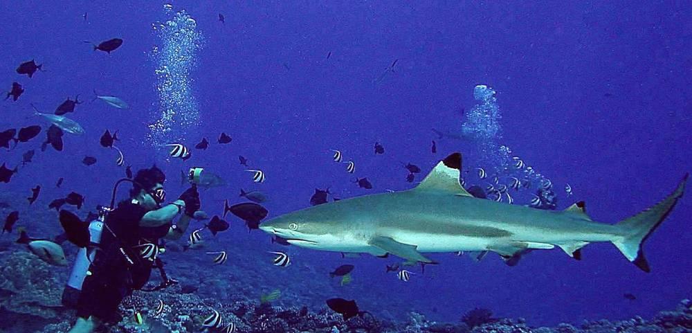 Alex's first shark dive