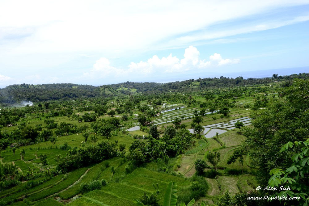 Bali Rice Field Above.jpg