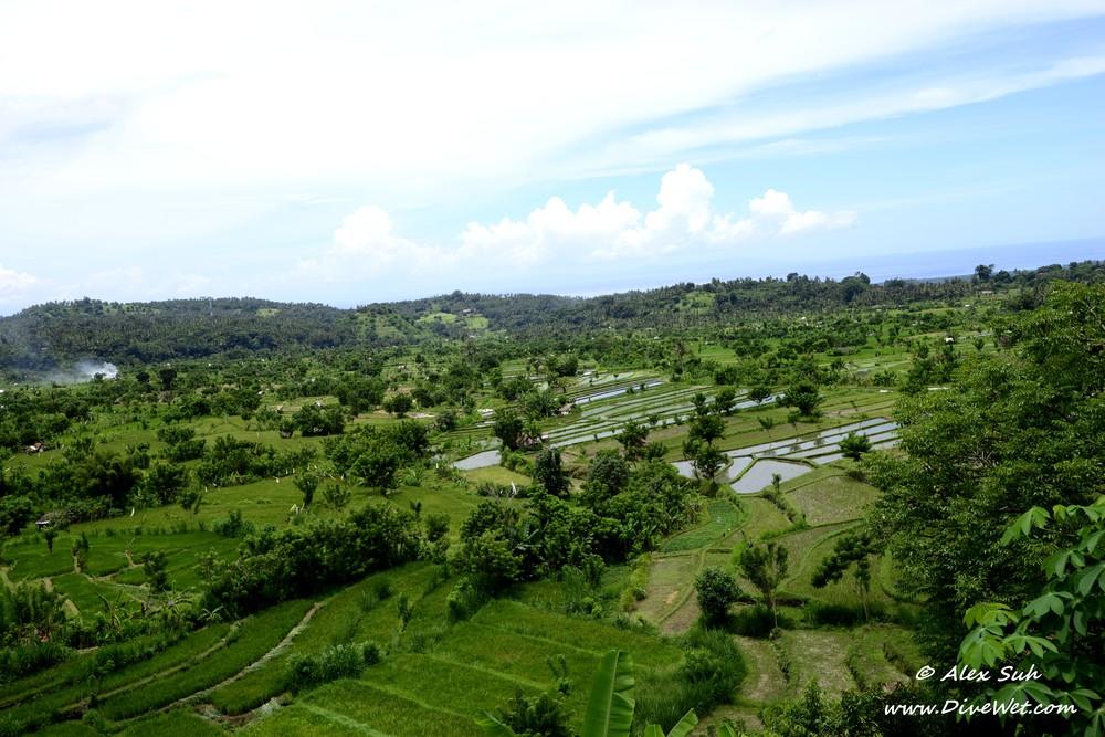 Bali Rice Field Above.jpg