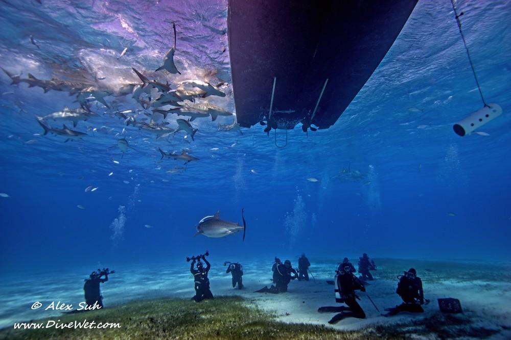 Divers Sharks Under the Boat.jpg