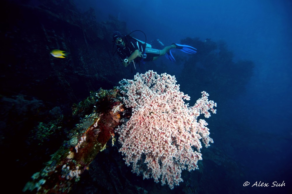 Diver Hovers Over Soft Coral