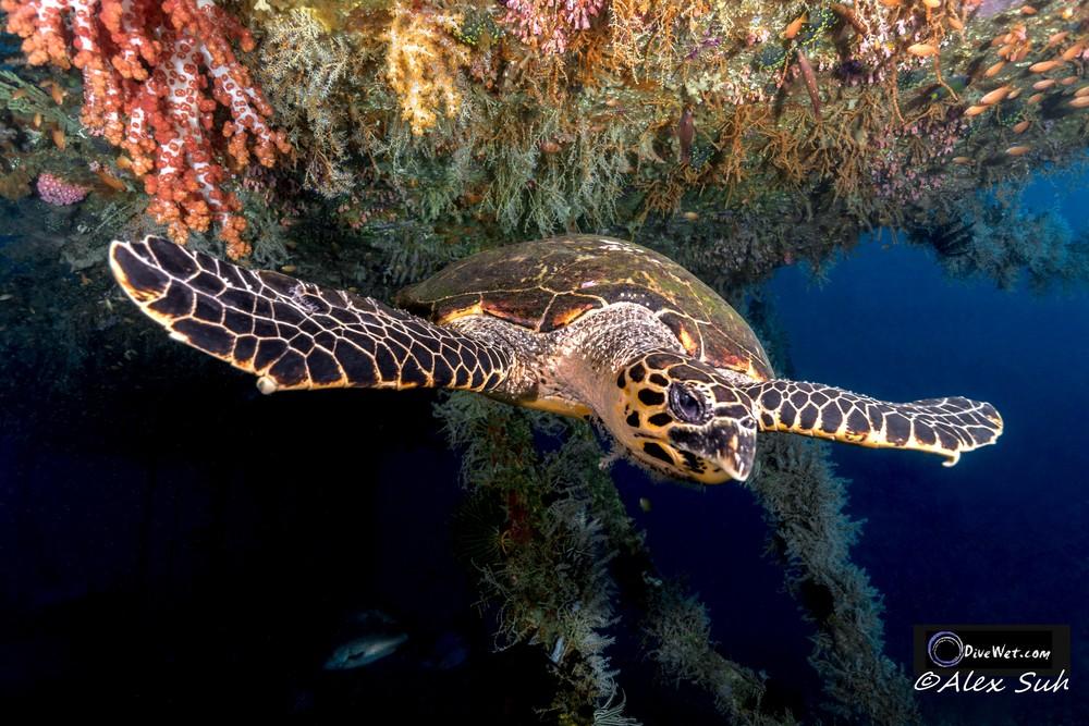 Sea Turtle Landing