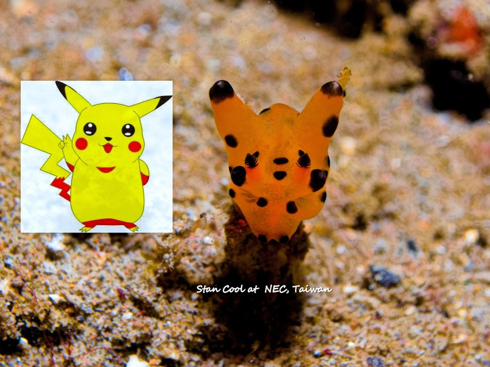 Pikachu Nudibranch