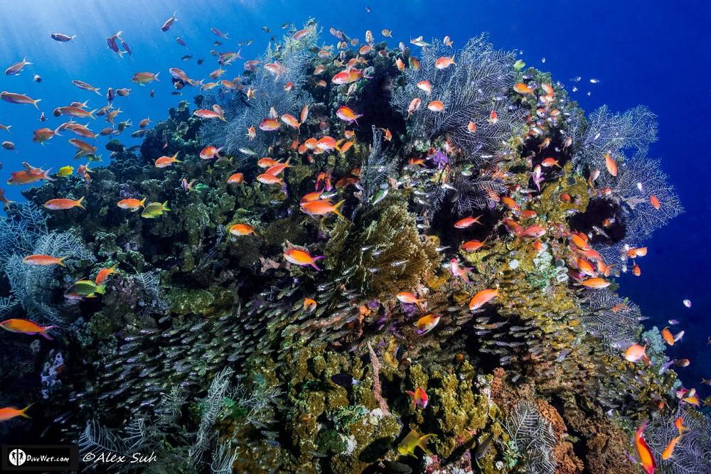 Fish Heaven,  Pong Pong, Bali, Indonesia