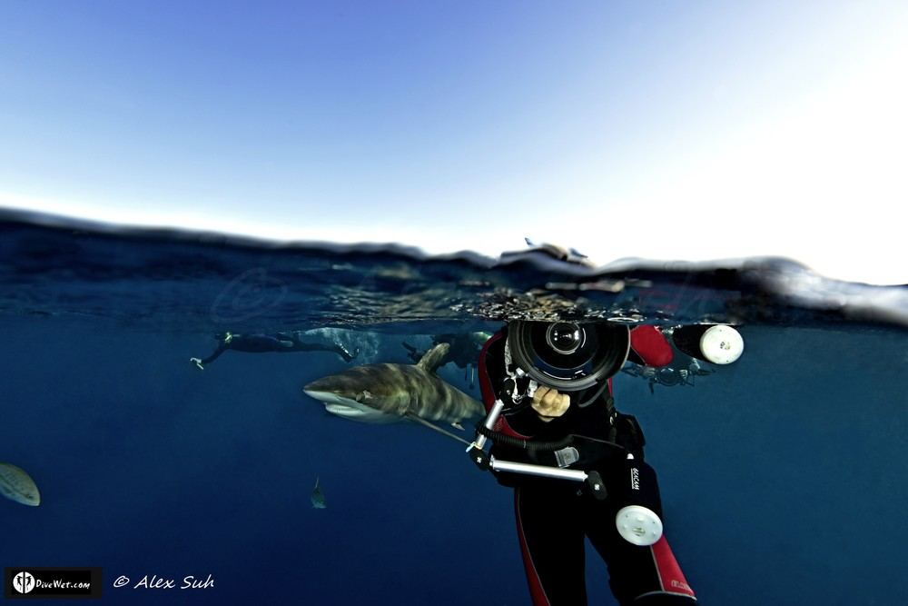 Amos Nachoum Taking Photo of Me with Silky Shark (Carcharhinus falciformis) - Over Under Image