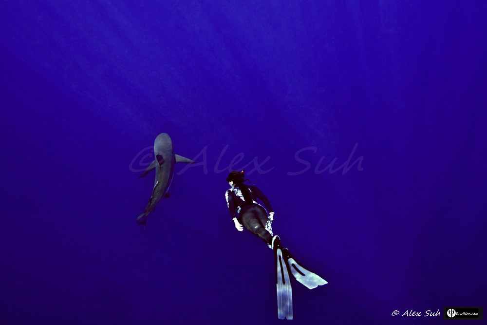 Greek Free Diver Katerina with Caribbean Reef Shark (Carcharhinus perezii)
