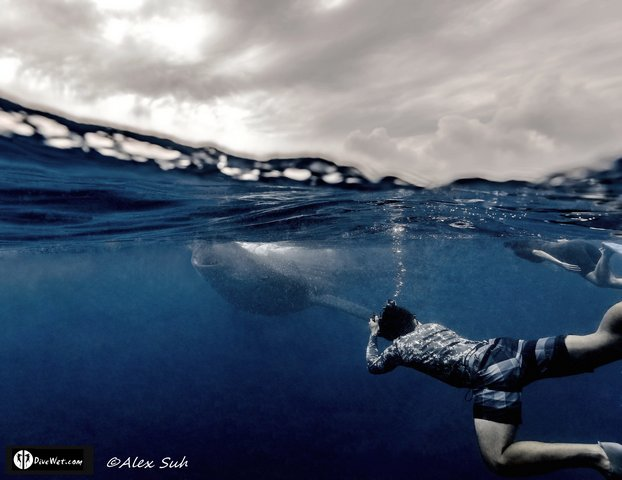 MARKED Rodrigo Laura Whale Shark Split 1 Crop_tn[1].jpg