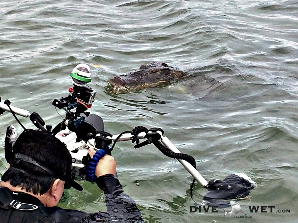 Alex photographing American Saltwater Crocodiles