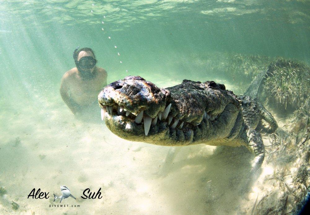 MARKED Gallo Croc Rainbow Nose 72.jpg