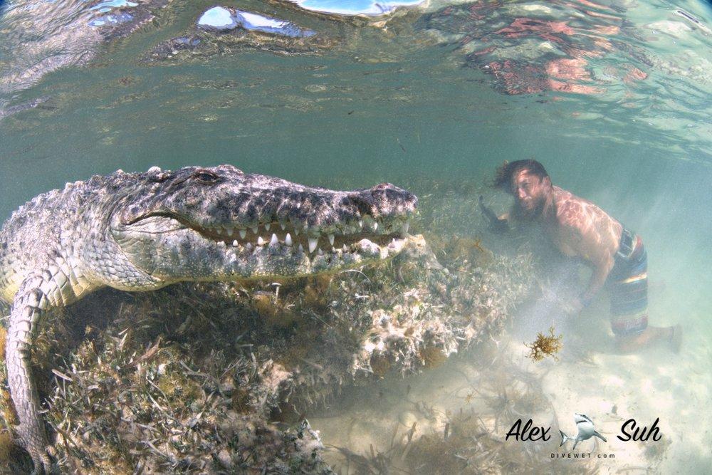 MARKED Gallo Croc UW No Mask 72dpi.jpg
