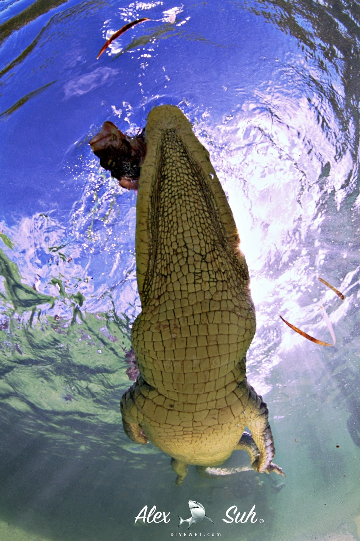 MARKED Croc Flyover 72.jpg
