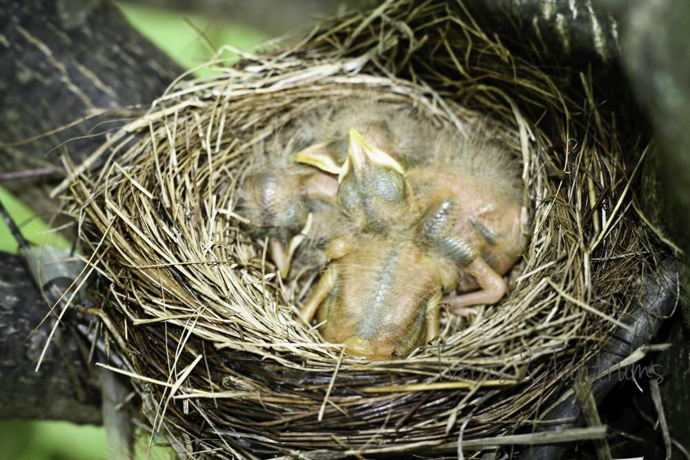 babybirds-1.JPG