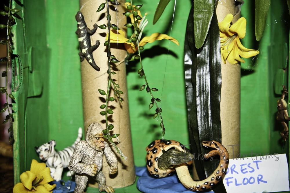 rainforest-9.JPG