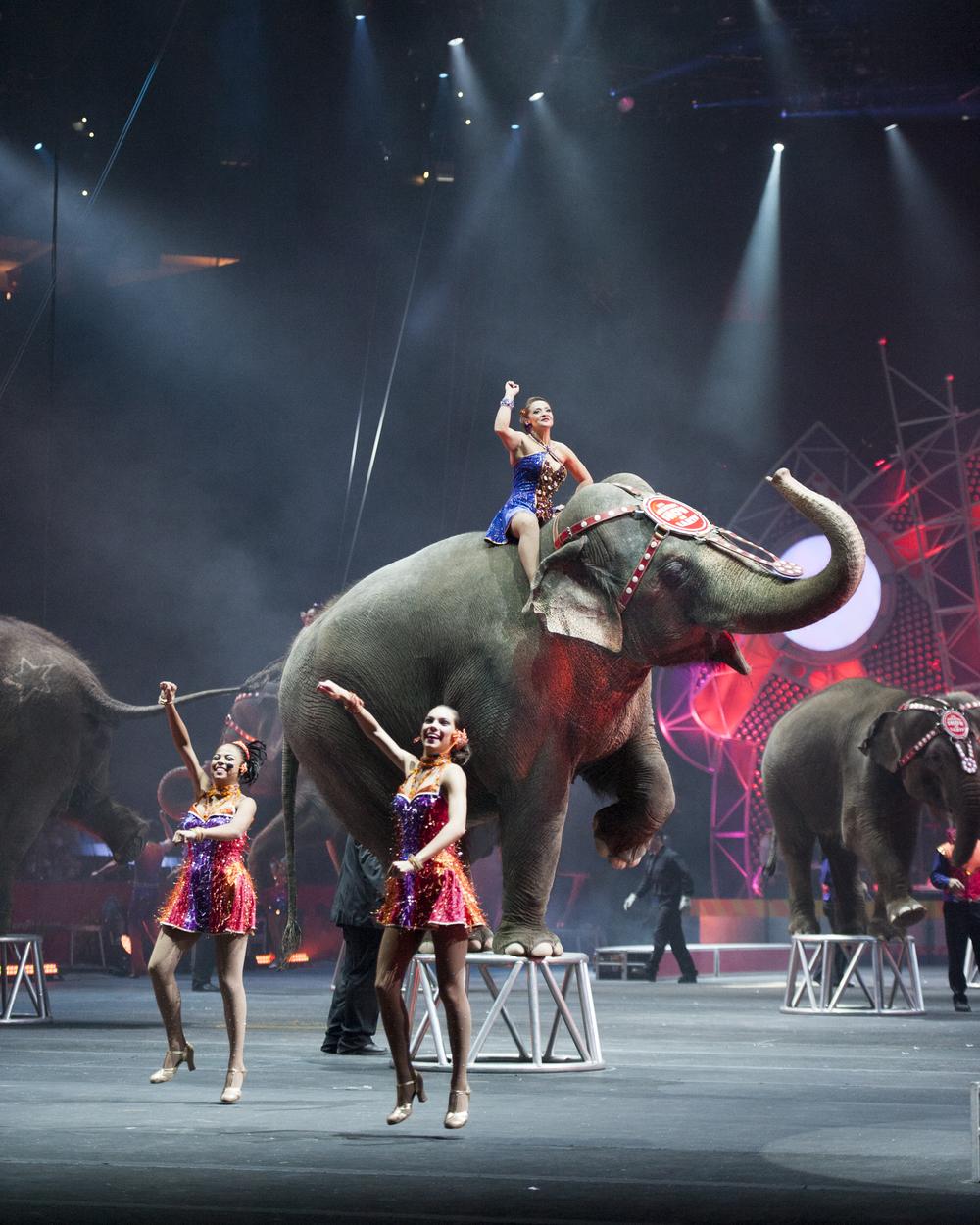 Ringling Bros. ® Asian elephants