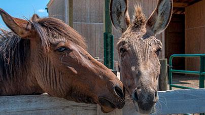 petting-zoo-zonkey-and-zorse.jpg
