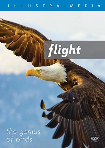 flightthegeniusofbirds.jpg
