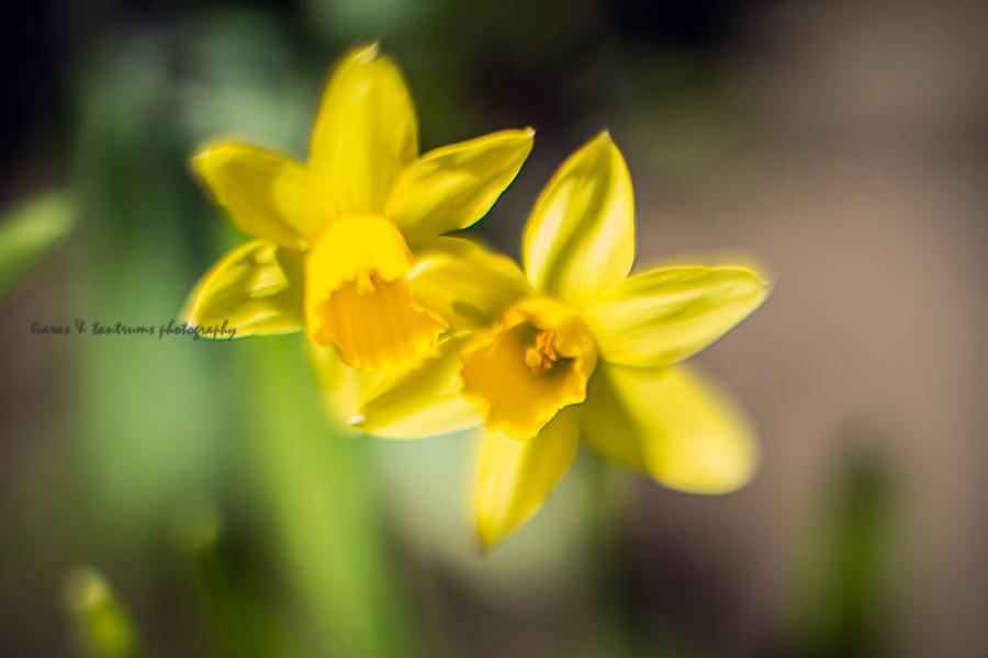 free-lensing-4.jpg