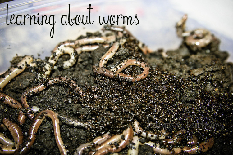 EarthWorms Home School