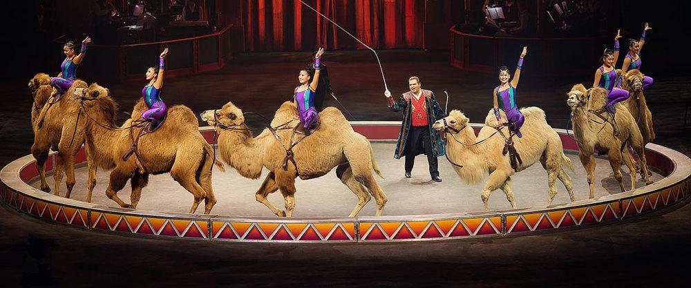 Robert Stipka & The Desert Goddesses: #CircusXtreme