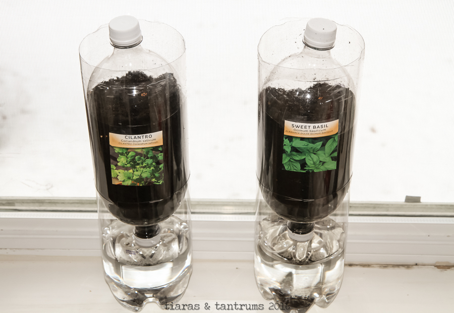 Ecosystem in a Bottle | A Science Project #CampSci