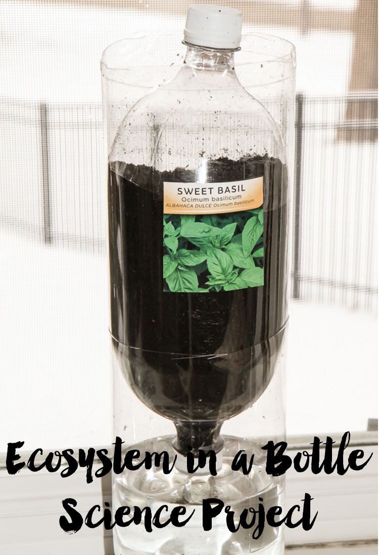 Ecosystem in a Bottle | Science Project #CampSci