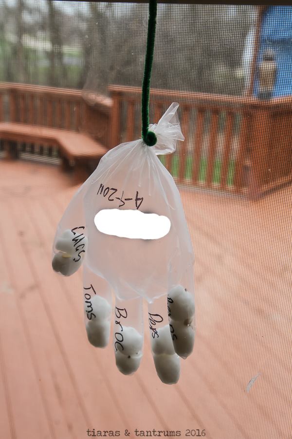 Garden in a Glove Science Project #CampSci