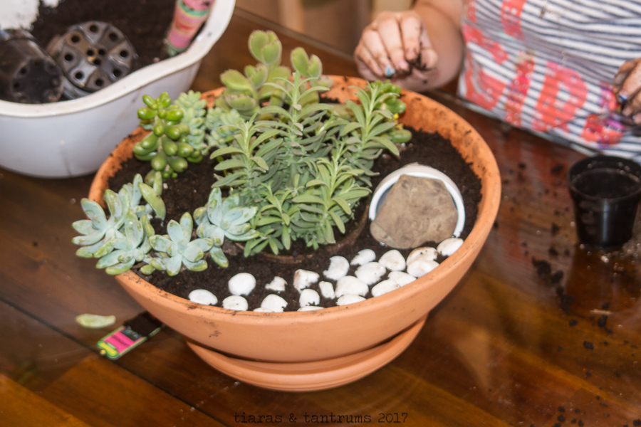 DIY Succulent Container Garden / Resurrection Garden