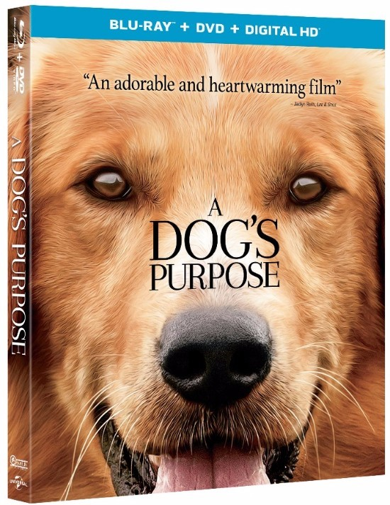A DOG'S PURPOSE | DVD Review & Giveaway