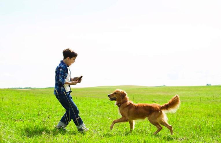 A DOG'S PURPOSE | DVD Review & Giveaway #ADogsPurpose