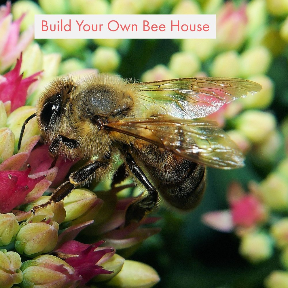 Build Your Own Bee House #CampSci